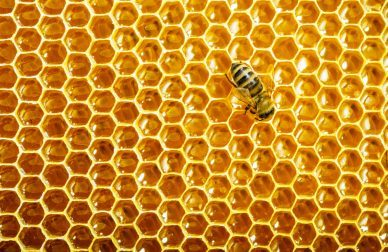 The Geometry and Algebra of Honeycomb